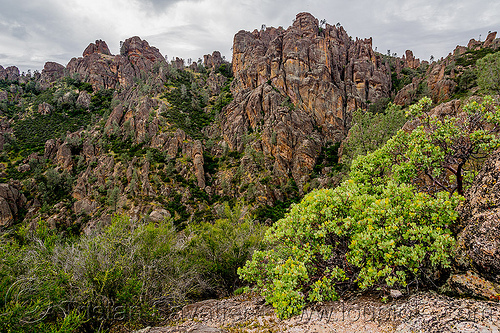 rock formations - pinnacles national park (california), arctostaphylos, cliff, hiking, manzanita, pinnacles national park, rock formations