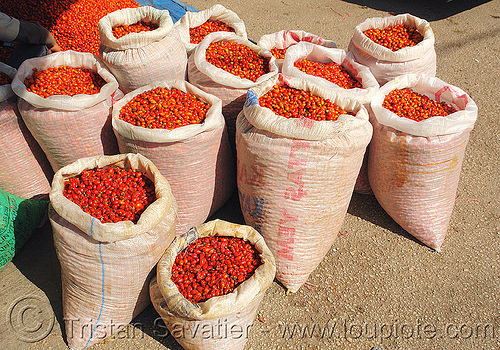 rose-hips bags, bags, bulk, cynorhodon, cynorrhodon, farmers market, fruits, gratte-cul, red, rose haw, rose hips