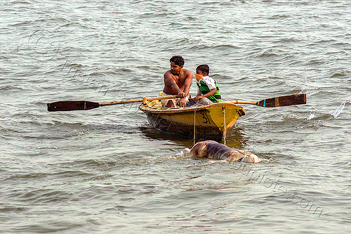 row boat towing decomposed cadaver on the ganges river (india), bloated, blood, boatman, cadaver, corpse, dead, death, decomposed body, decomposing, floating, ganga, ganges river, hindu, hinduism, human remains, india, man, putrefied, river boat, rowing boat, small boat, varanasi