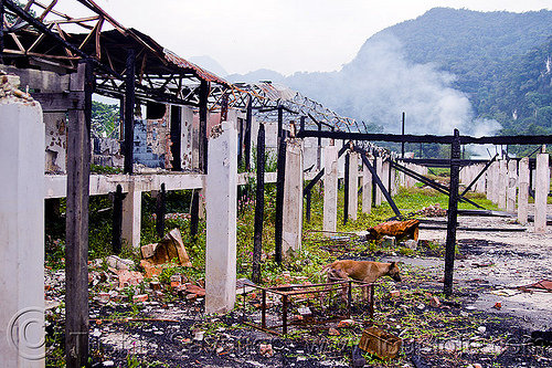 ruins of batu bungan longhouse, batu bungan penan, burned down, columns, concrete, debris, destroyed, destruction, dog, gunung mulu national park, houses, longhouse, pillars, ruins, village
