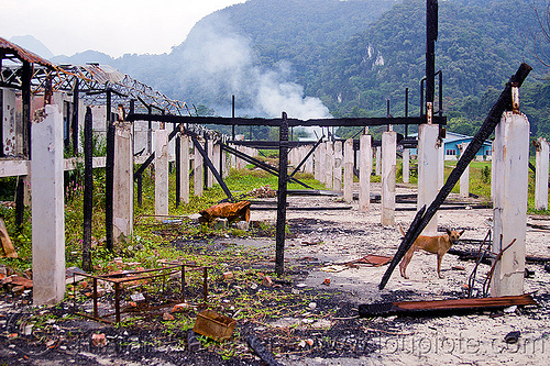 ruins of batu bungan longhouse destroyed by fire, batu bungan penan, borneo, burned down, columns, concrete, destroyed, destruction, dog, gunung mulu national park, houses, longhouse, malaysia, pillars, ruins, village