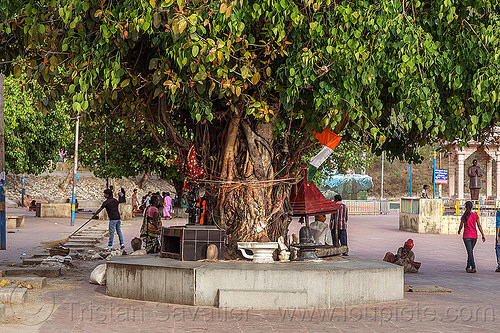 sacred banyan tree on the triveni ghat - rishikesh (india), banyan tree, ghats, hinduism, rishikesh, sacred tree, triveni ghat, trunk