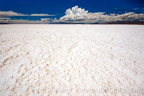 salt flat, blue sky, desert, halite, horizon, jujuy, noroeste argentino, rock salt, salar, salinas grandes, salt bed, salt flats, salt lake, white