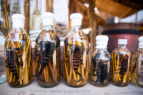 scorpion wine bottles - laos, alcohol, lao-lao, laos, liquor, luang prabang, pak ou caves temples, rice wine, scorpion wine, scorpions, vodka, whisky village