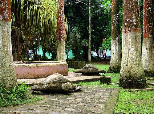 sea-turtles - parque vargas - puerto limon (costa rica), costa rica, park, parque balvanero vargas, parque vargas, puerto limon, sculptures, sea-turtles, trees
