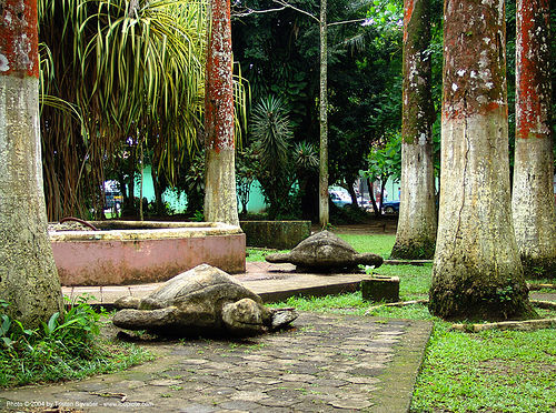 sea-turtles - parque vargas - puerto limon (costa rica), park, parque balvanero vargas, sculptures, trees