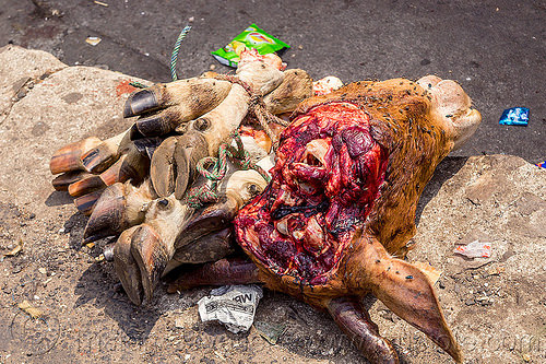 severed cow head and feet at meat market (india), beef, cow feet, cow head, east khasi hills, meat market, meat shop, meghalaya, pynursla, raw meat, rope, severed head