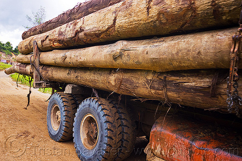 side view of logging truck, borneo, deforestation, environment, logging camp, malaysia, road, tree logging, tree logs, tree trunks