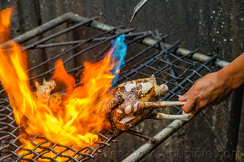 chicken singed with fire (philippines), baguio, chicken, fire, flame, philippines, pinikpikan, poultry, singed, singing, slaughtering