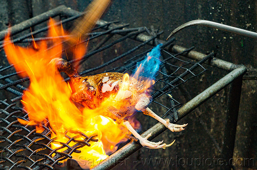 singeing chicken - preparing pinikpikan (philippines), baguio, burned, burning, chicken, fire, flame, grilled, philippines, pinikpikan, poultry, singed, singeing, slaughtering