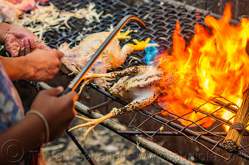 singeing chicken - preparing pinikpikan (philippines), baguio, burned, burning, chicken, fire, grilled, philippines, pinikpikan, poultry, singed, singeing, slaughtering