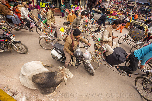 sleepy bull oblivious to street traffic (india), bicycles, bikes, bull, cycle rickshaws, india, lying down, motorcycles, moving, resting, street cow, traffic jam, varanasi