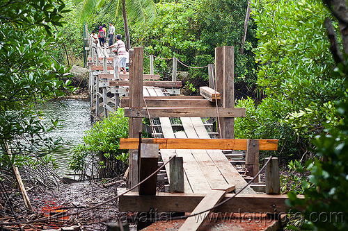 small bridge being repaired, construction, lumber, mangrove, pedestrian bridge, rain forest, river, rusted, rusty, shoring, water, wooden