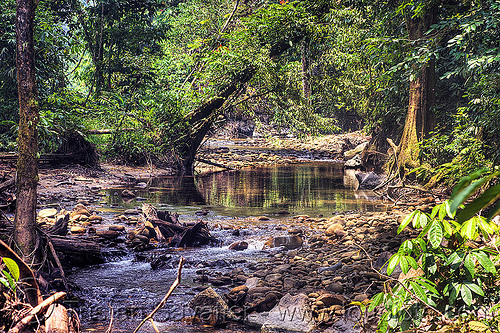 small river in the jungle, borneo, gunung mulu national park, jungle, malaysia, melinau river, rain forest, sungai melinau