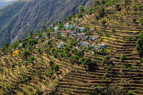 small village and terraced fields in himalayas (india), agriculture, india, mountains, terrace farming, terraced fields, valley, village