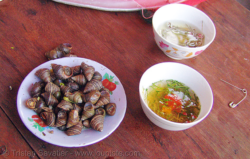 snail snack - vietnam, cat ba island, cát bà, delicacy, dishes, food, plate, safety pins, snails, vietnam
