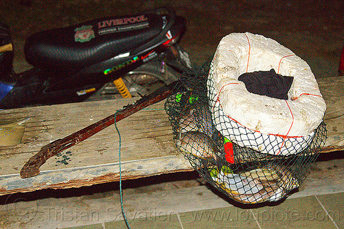 speargun and fisherman's catch in floating net, borneo, fish hunting, fishes, kelambu beach, malaysia, night, snorkeling, speargun, stryrofoam