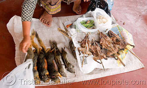 squirrels - roasted (laos), cooked, dead, food, laos, meat, roasted, rodents, squirrels
