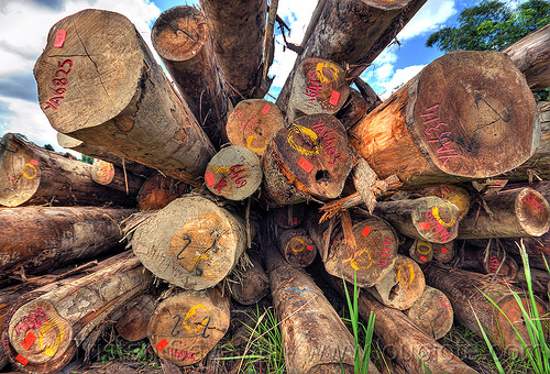 stack of tree logs (borneo), borneo, deforestation, environment, logging camp, malaysia, tree logging, tree logs, tree trunks, vanishing point