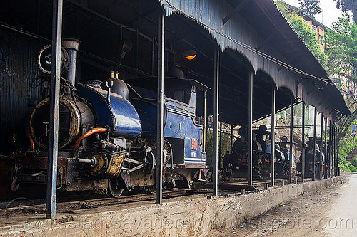 steam locomotives - darjeeling himalayan railway train yard (india), 782 mountaineer, 788 tusker, 802 victor, 804 queen of the hills, darjeeling himalayan railway, darjeeling toy train, india, narrow gauge, railroad, steam engine, steam locomotive, steam train engine, train depot, train yard
