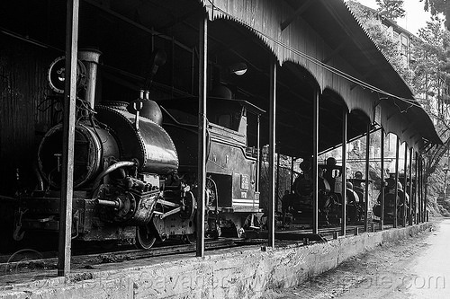 steam locomotives - darjeeling himalayan railway train yard (india), 782 mountaineer, 788 tusker, 802 victor, 804 queen of the hills, darjeeling himalayan railway, darjeeling toy train, narrow gauge, railroad, steam engine, steam locomotive, steam train engine, train depot, train yard