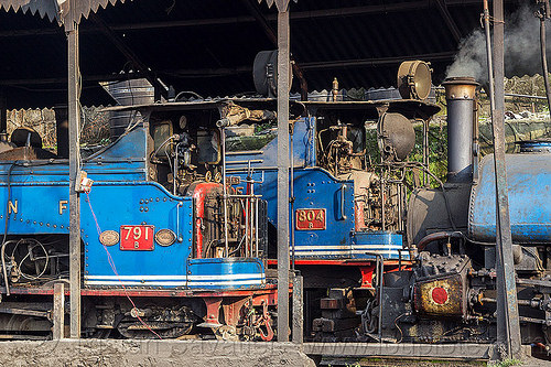 steam locomotives parked in darjeeling train yard (india), 782 mountaineer, 791, 804 queen of the hills, darjeeling himalayan railway, darjeeling toy train, narrow gauge, railroad, steam engine, steam locomotive, steam train engine, train depot, train yard