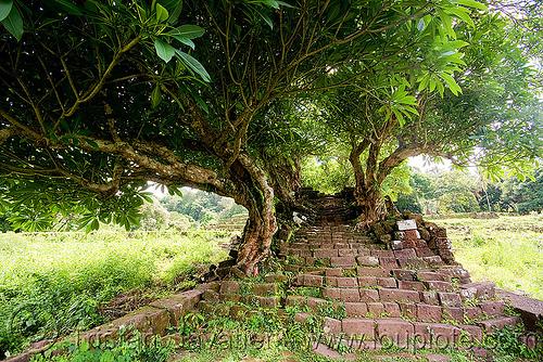 stone stairs ruin and trees - wat phu champasak (laos), hindu temple, hinduism, khmer temple, ruins, stone stairs, trees, wat phu champasak