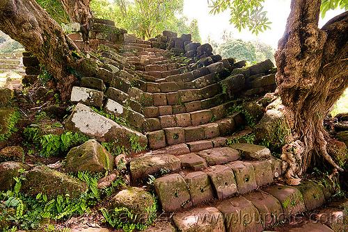 stone stairs - wat phu champasak (laos), khmer temple, ruins, stone stairs, trees, wat phu champasak