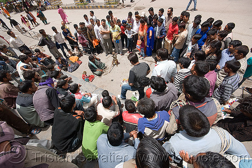 street circus show with trained monkey - manali (india), circus animal, crowd, india, manaly, monkey, street performer