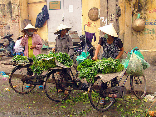 street vendors with bicycles - produce market - vietnam, bicycles, bikes, farmers market, hanoi, merchant, street market, street seller, street vendors, vendor, vietnam