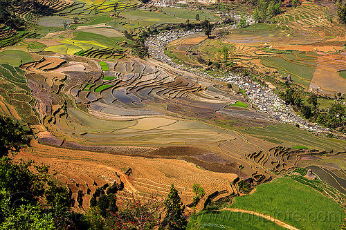 terrace agrigulture - paddy fields (nepal), agriculture, rice paddies, rice paddy fields, river, terrace farming, terraced fields, valley