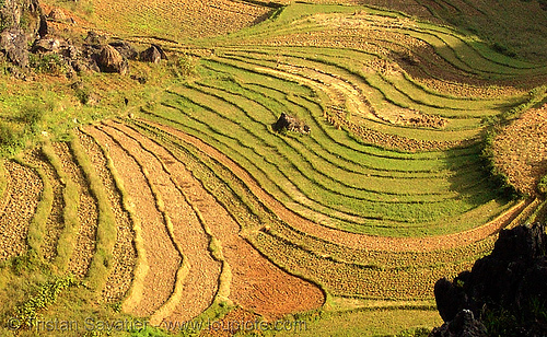 terrace farming - between Tám Sơn and Yên minh - vietnam, agriculture, paddy fields, terrace farming
