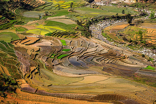 terrace farming - paddy fields (nepal), agriculture, rice paddies, rice paddy fields, river, terrace farming, terraced fields, valley