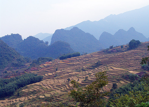 terrace farming - rice fields - vietnam, rice paddies, rice paddy fields, terrace agriculture, terrace farming, terraced fields, vietnam