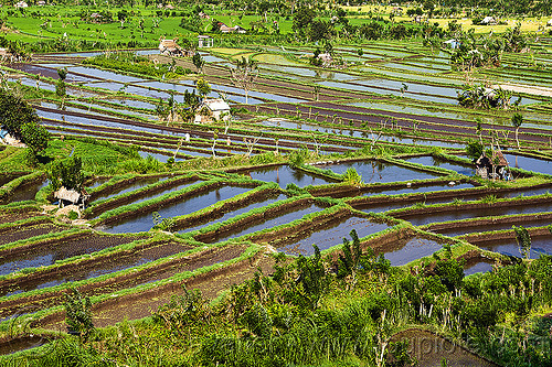 terrace farming - rice paddies - bali (indonesia), agriculture, bali, flooded, huts, indonesia, rice paddies, rice paddy fields, terrace farming, terraced fields