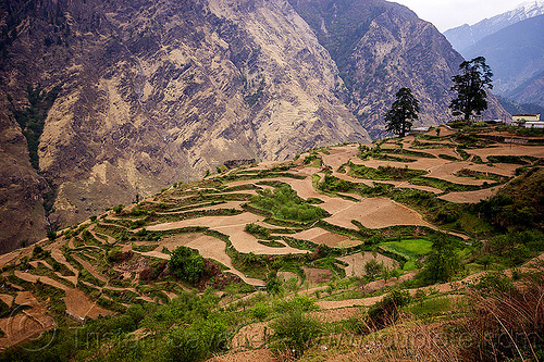 terraced fields - dhauliganga valley (india), agriculture, dhauliganga valley, india, mountains, terrace farming, terraced fields