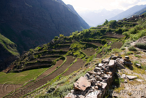 terrace fields near keylong - manali to leh road (india), agriculture, fields, keylong, ladakh, terrace farming, traditional farming, valley