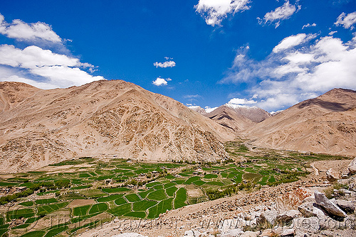 terrace fields, upper chemrey valley - road to pangong lake - ladakh (india), farming, green, mountains, paddy fields, rice paddy, rice paddy fields, terrace farming