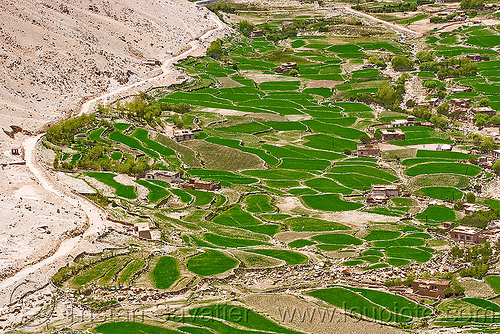 terraced fields, upper chemrey valley - road to pangong lake - ladakh (india), aerial photo, agriculture, chemrey valley, dry stone walls, india, ladakh, paddies, rice paddy fields, terrace farming, terraced fields
