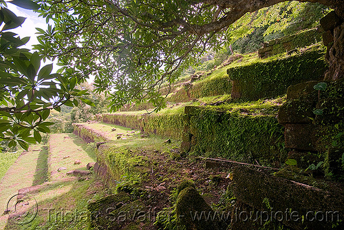 terraces and stair - wat phu champasak (laos), hindu temple, hinduism, khmer temple, laos, ruins, stone stairs, wat phu champasak