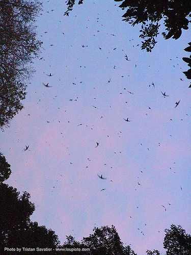 tham lot cave - tham lod - birds and bats - thailand, bats, birds, blue, caving, many, natural cave, spelunking, swifts, tham lod, tham lot, wildlife, ประเทศไทย