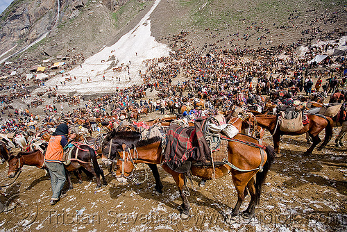 thousands of ponies and porters in the valley - amarnath yatra (pilgrimage) - kashmir, amarnath yatra, bearer, crowd, hiking, hindu pilgrimage, horses, india, kashmir, kashmiris, mountains, pilgrims, ponies, pony station, snow, trekking
