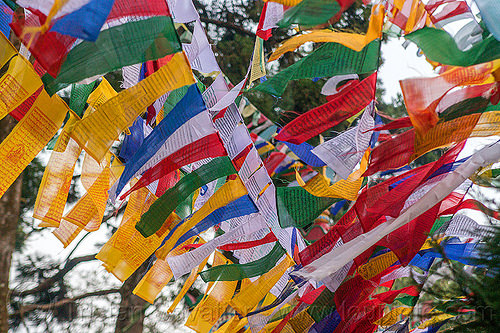 tibetan prayer flags (india), buddhism, darjeeling, india, observatory hill, prayer flags, tibetan, trees