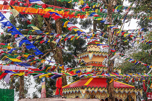 tibetan prayer flags - observatory hill - darjeeling (india), buddhism, darjeeling, hindu temple, hinduism, observatory hill, prayer flags, tibetan, trees