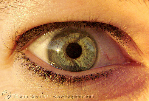 tiffney's eye (with contact lens!), close up, contact lens, contact lenses, contacts, eye color, eyelashes, iris, macro, psy trance, pupil, right eye, tiffney, woman