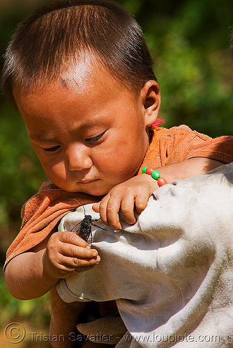 toddler playing with live cicada (laos), child, cicada, hintang archaeological park, hintang houamuang, insect, kid, san kong phanh, toddler