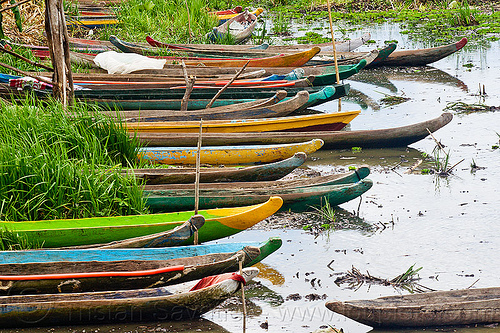 traditional indonesian canoes in tidal marsh, canoes, colored, colorful, flores island, indonesia, mooring, painted, river boats, sumbawa, tidal marsh
