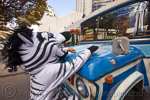 traffic zebra (bolivia), bus, cnn ireport, costume, dodge, la paz, lorry, pedestrian crossing, street, traffic zebra, truck