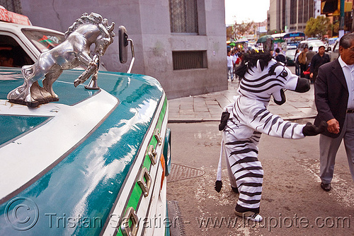 traffic zebra - la paz (bolivia), bolivia, bus, chrome, cnn ireport, costume, dodge, hood ornament, horse, la paz, lorry, mustang, pedestrian crossing, stallion, traffic zebra, truck