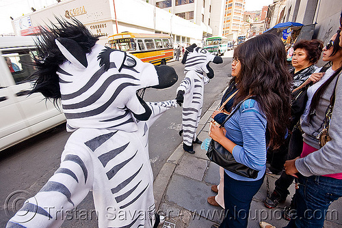 traffic zebras - la paz (bolivia), cnn ireport, costume, pedestrian crossing, traffic zebra